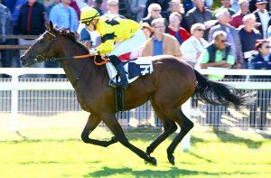 Blog - Gallop France